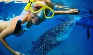woman-swimming-whale-shark-red-sea-560x333